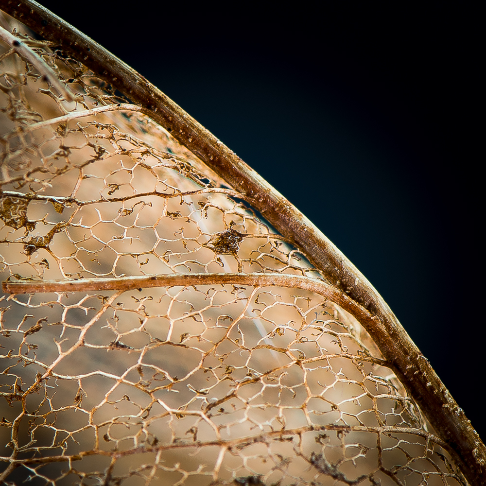 Magnolie (mal anders)