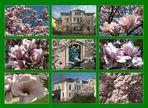 magnolien 2011