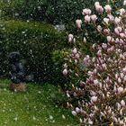 Magnolien im Schnee