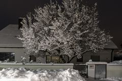 Magnolienbaum der vom Frühling träumt