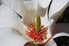 Magnolienblüte -2-