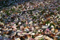 Magnolienblüte - Und schon ist wieder alles vorbei