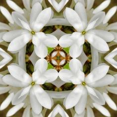 Magnolienblütenmandala