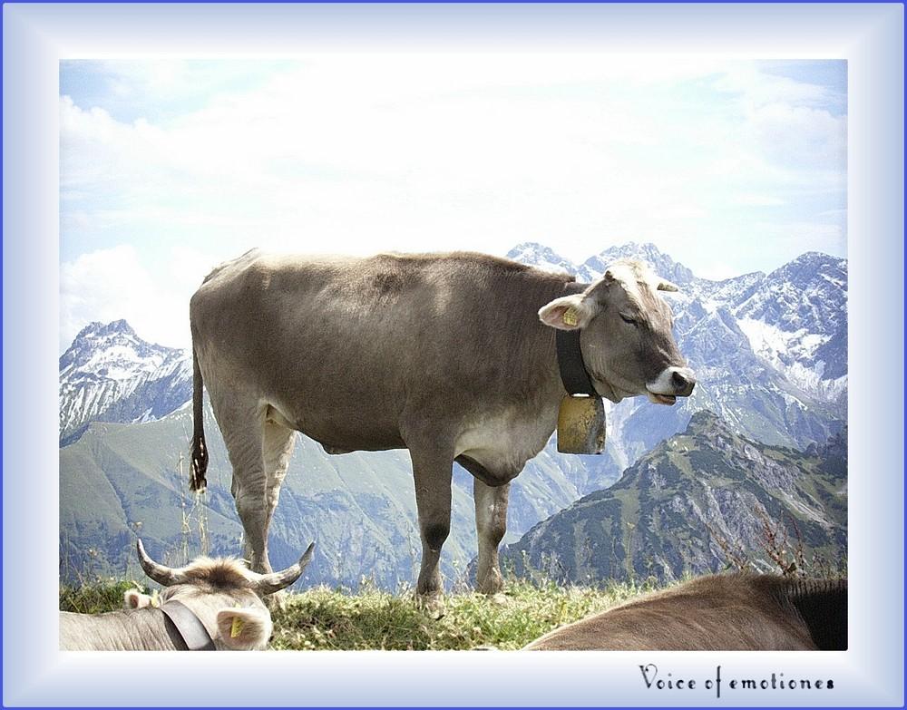 mai liebschda Kuh