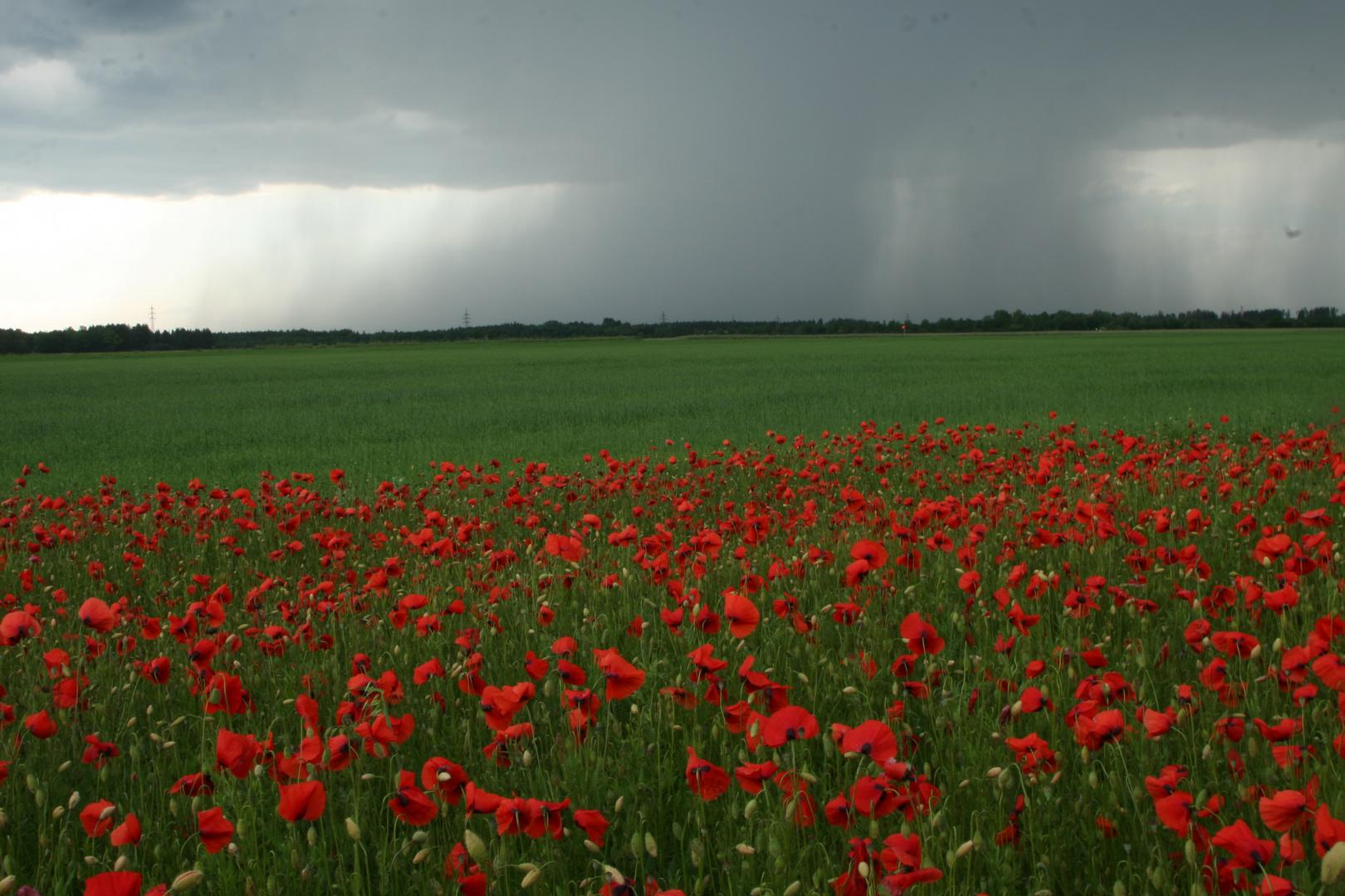 Mai - Regen