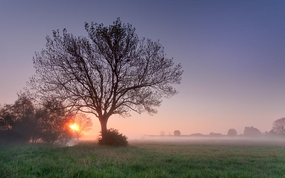 Mai Sonne