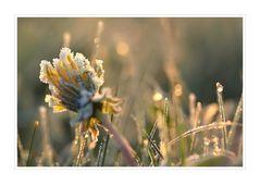 (Mai)Frostmorgen