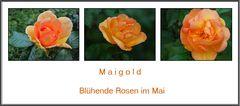 Maigold....zum Wochenende