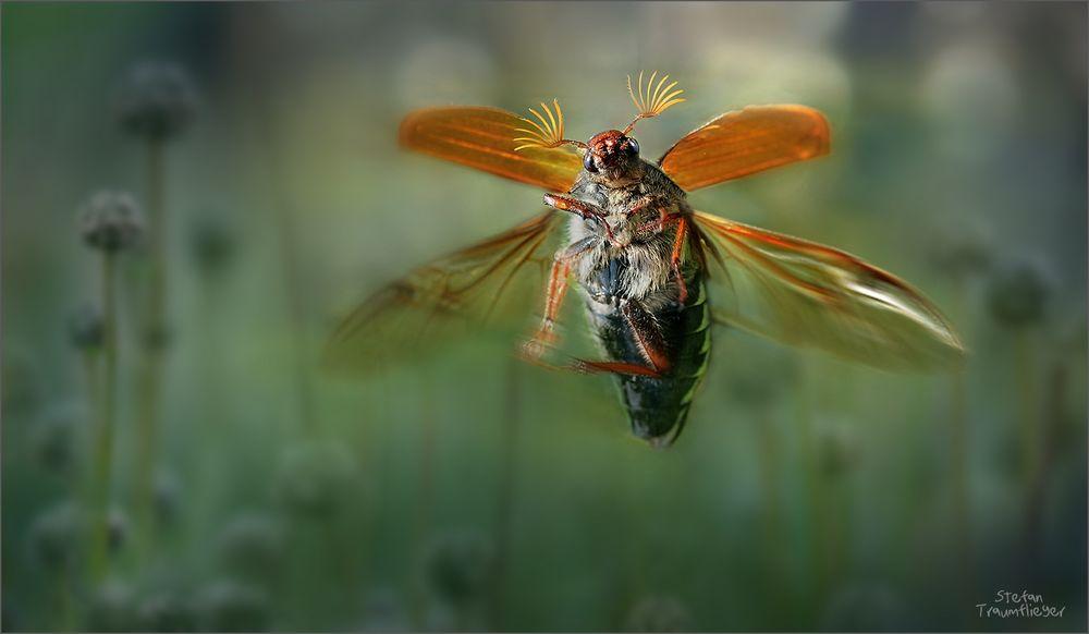 maikaefer_fly