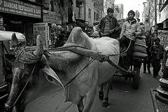 Main Bazaar Road in Paharganj, New Delhi.