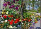 [Mainau 7] *Blumengarten*