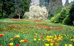 Mainau Frühling  II Jahr  2000