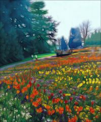 Mainauer Tulipanen