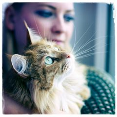 Maine Coon – Sonny