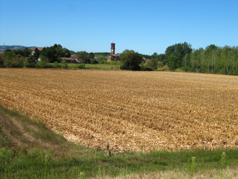 Maisfeld geerntet bei San Zenone Po (Pavia)