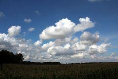 Maisfeld unter Wolken