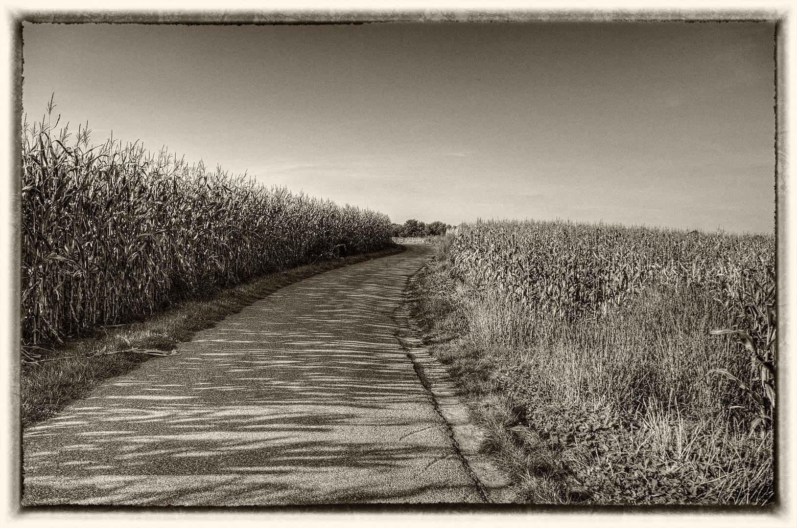 Maisfelder, aber anders