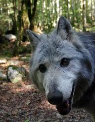 Maison de Loups
