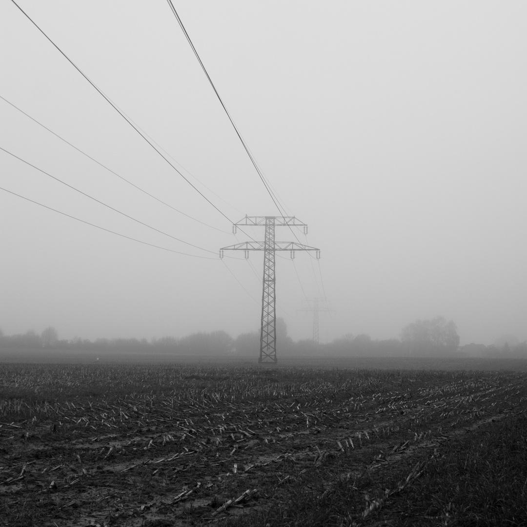 Maisstoppeln im Nebel mit Strommast