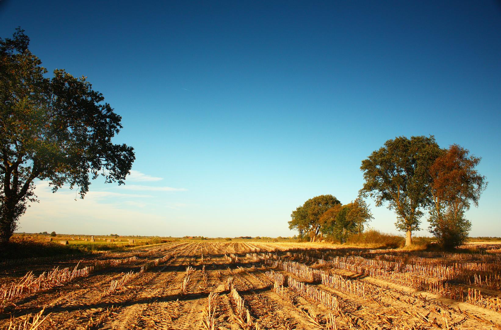 Maiswüste Ostfriesland (2)