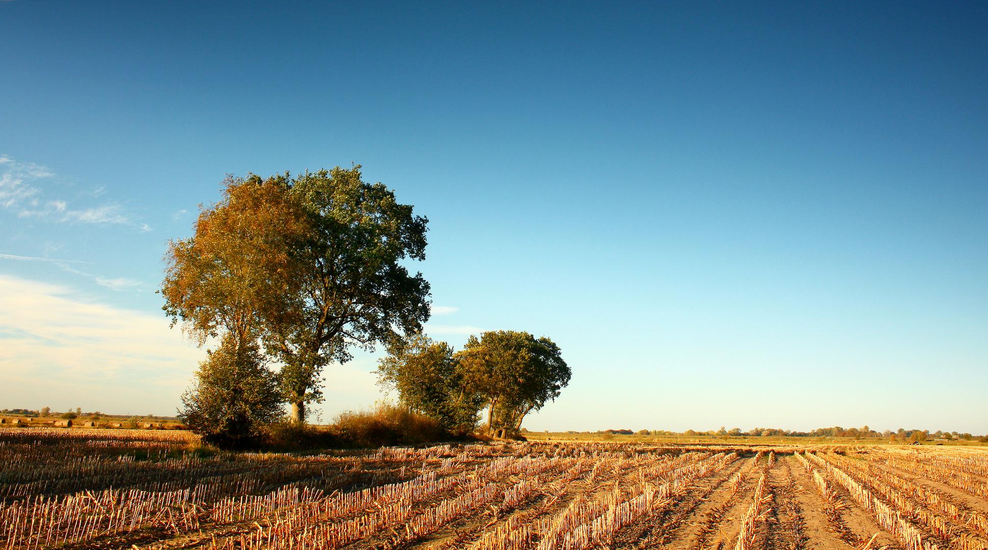 Maiswüste Ostfriesland