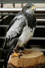 Majestätischer Vogel