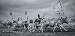 Makepung ~ Bullrace @ Negara, Indonesia