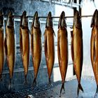 Makrelen Gold