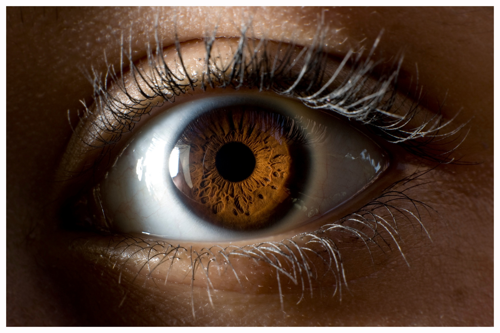 Makro Auge
