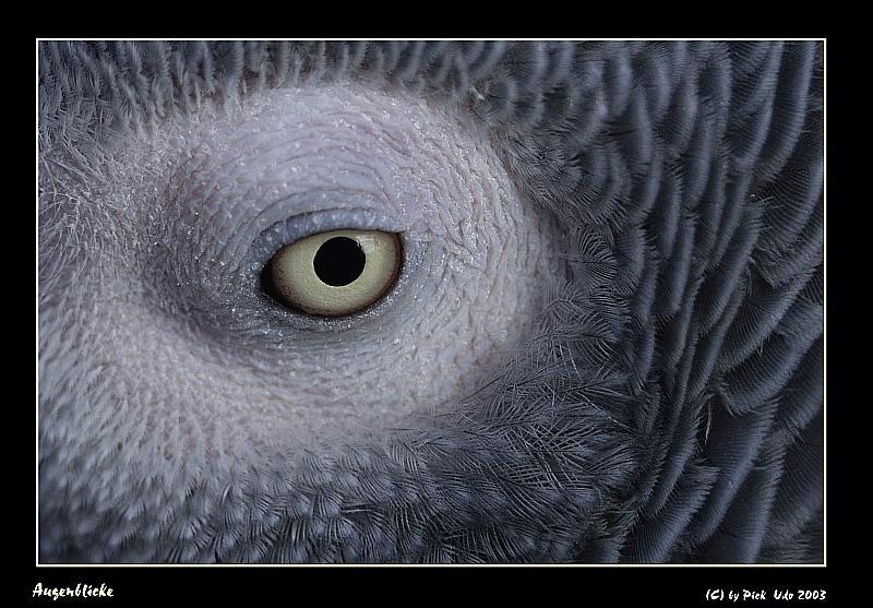 Makro eines Auges
