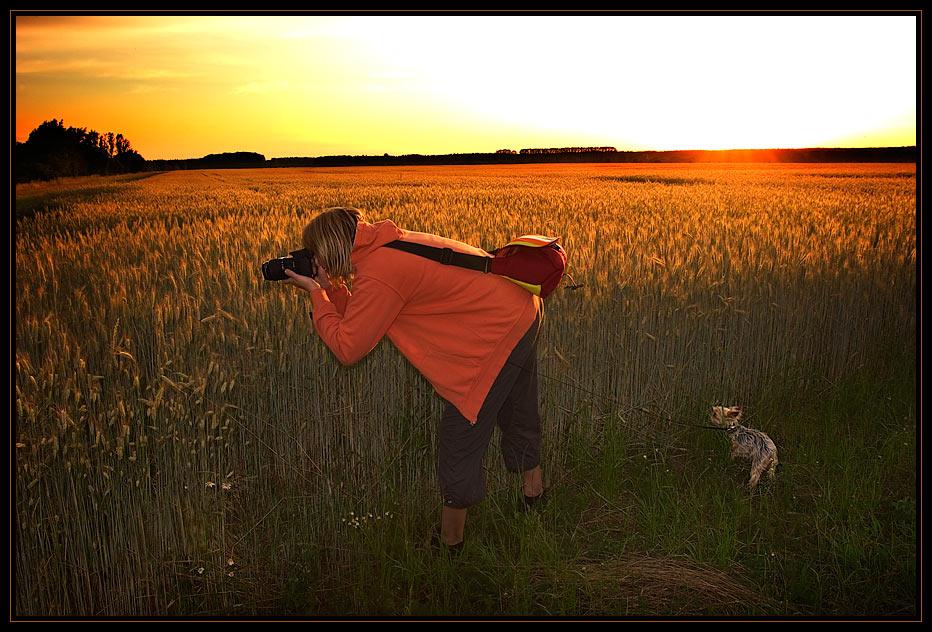 Makro mit Hund bei Sonnenuntergang...