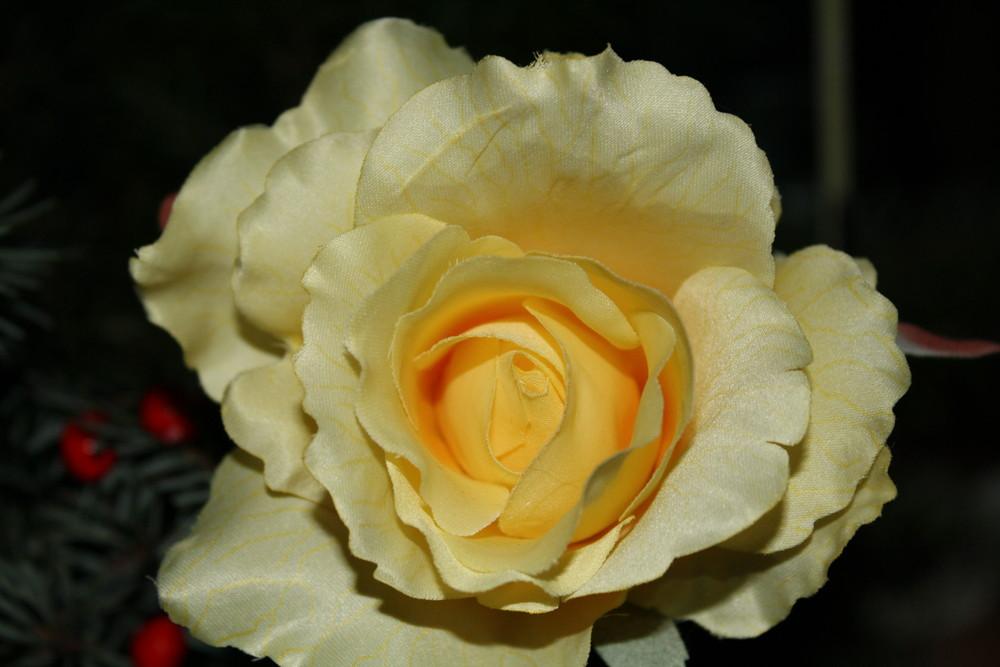 Makroaufnahme einer Rose