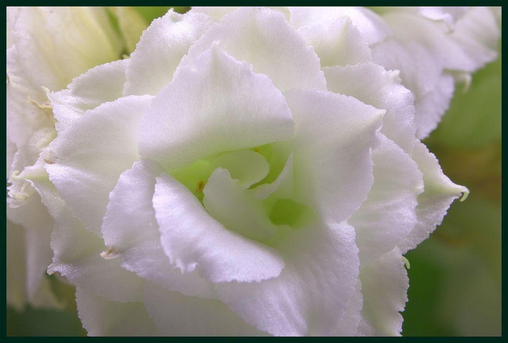 Makroaufnahme einer unbekannten Blüte
