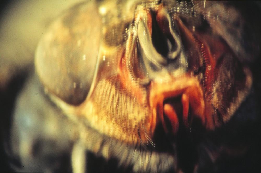 Makrofly2