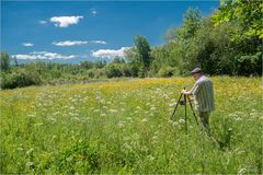 Makrofotografie in der Sommerwiese (Video)