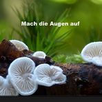 Makrowelt der Pilze (Video)