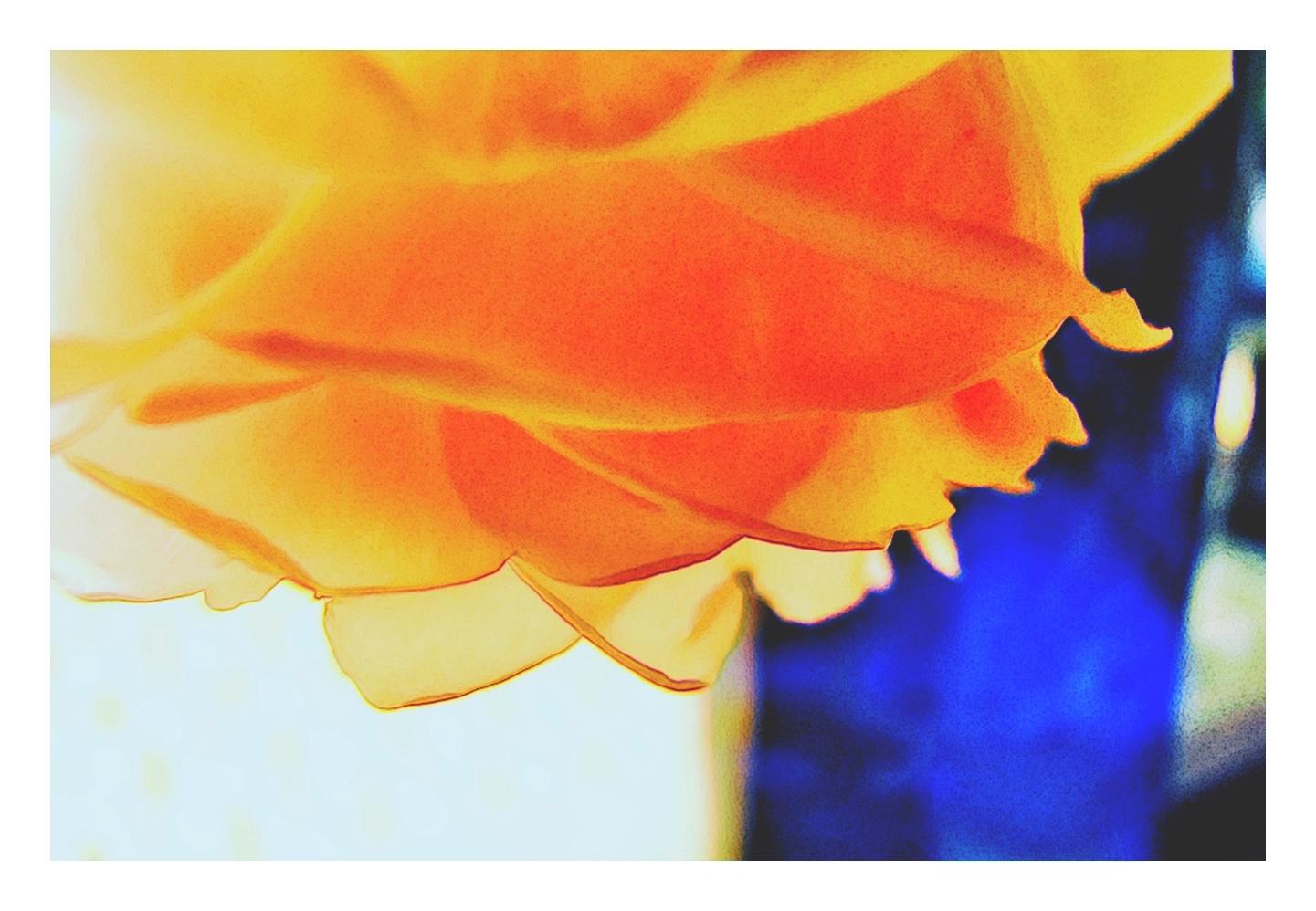 mal eine kleine Rose
