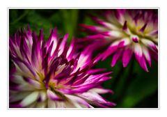 Mal etwas Farbe mit einem Mittwochsblümchen .....