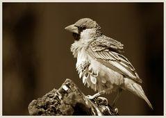 Mal nen Vogel in SW