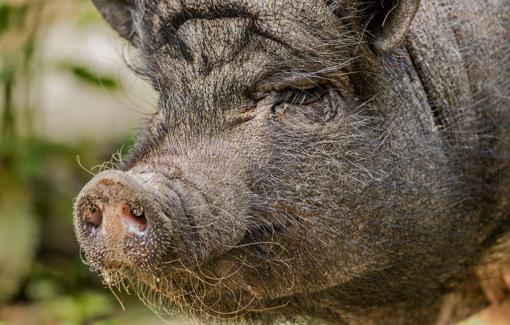 Mal Schwein haben .....