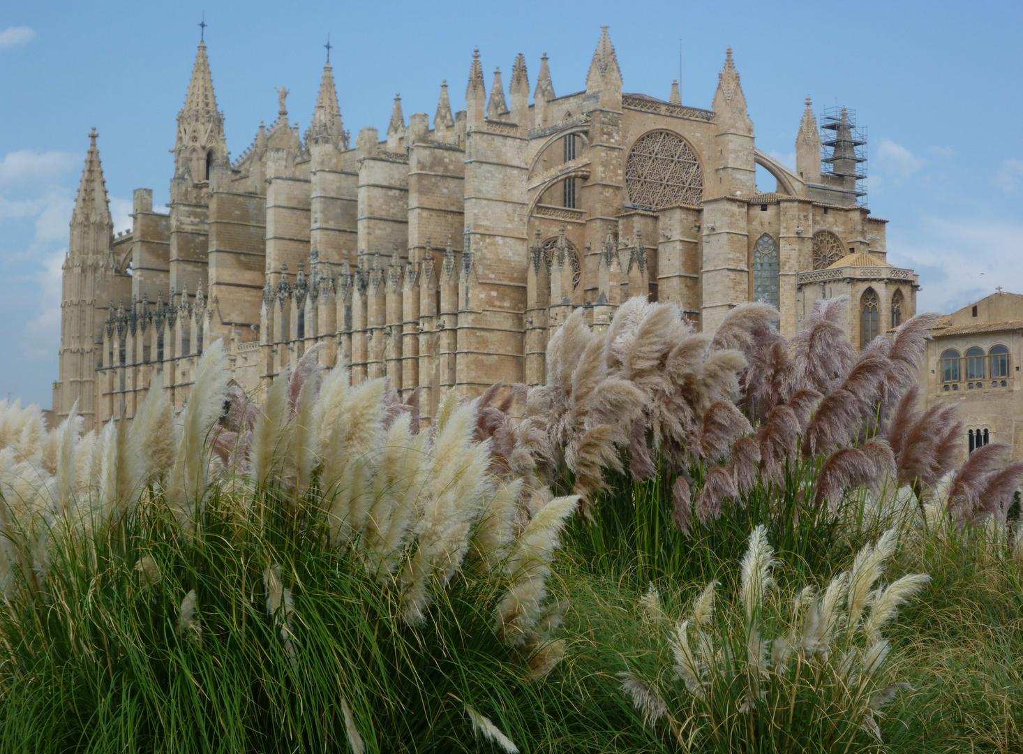 Mal wieder... die Kathedrale