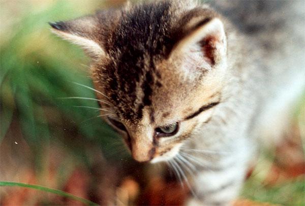 mal wieder eine katze