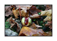 Mal wieder Herbst......