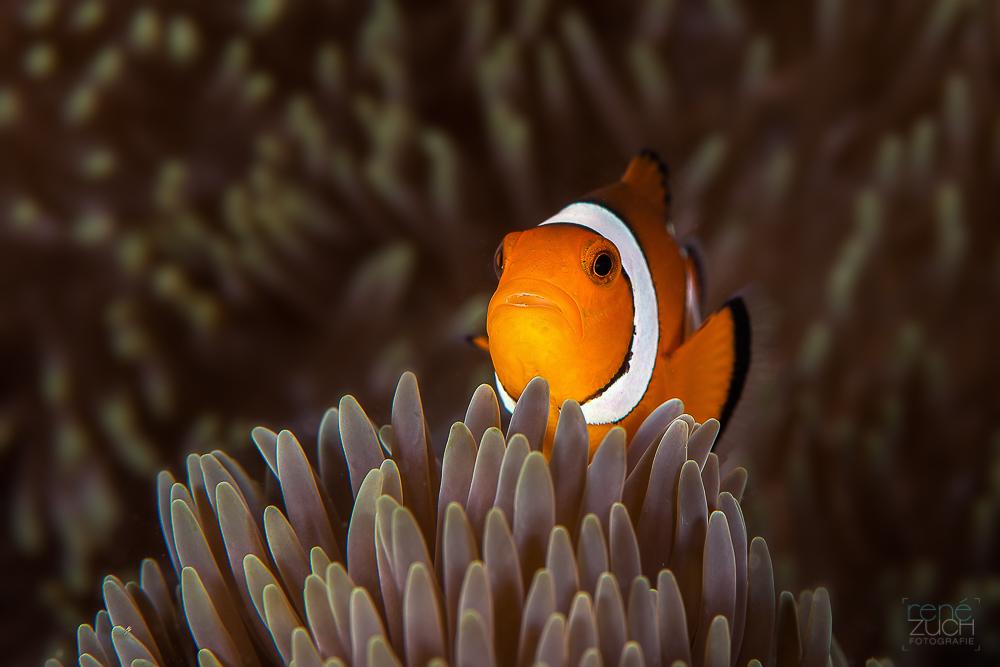 Mal wieder Nemo