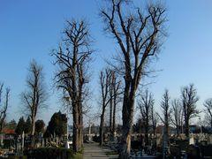 Malacky - Friedhof