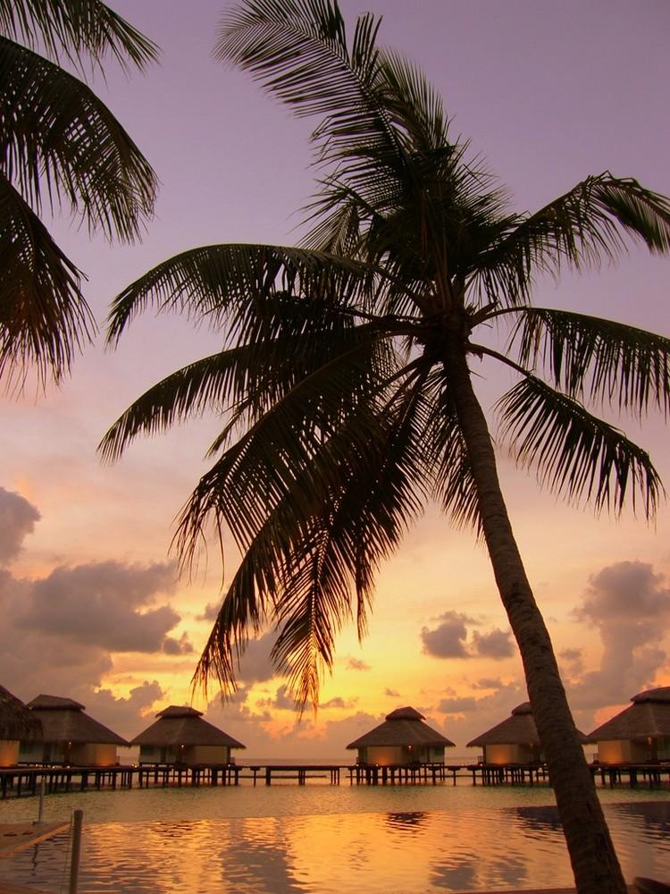 Maldive - Sunset time.