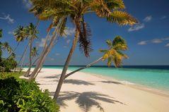 Maldives the big blue