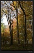 Male Karpaty forest