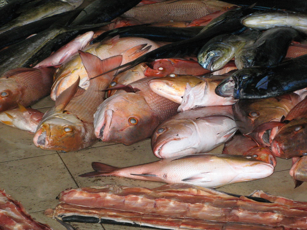 Malediven Frischfisch