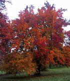 Maler Herbst
